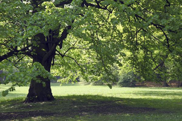Public park in spring